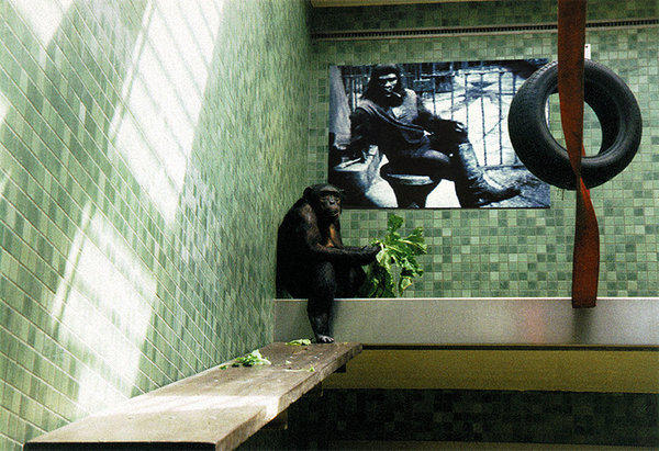 Berlin Cage – Planet of the Apes